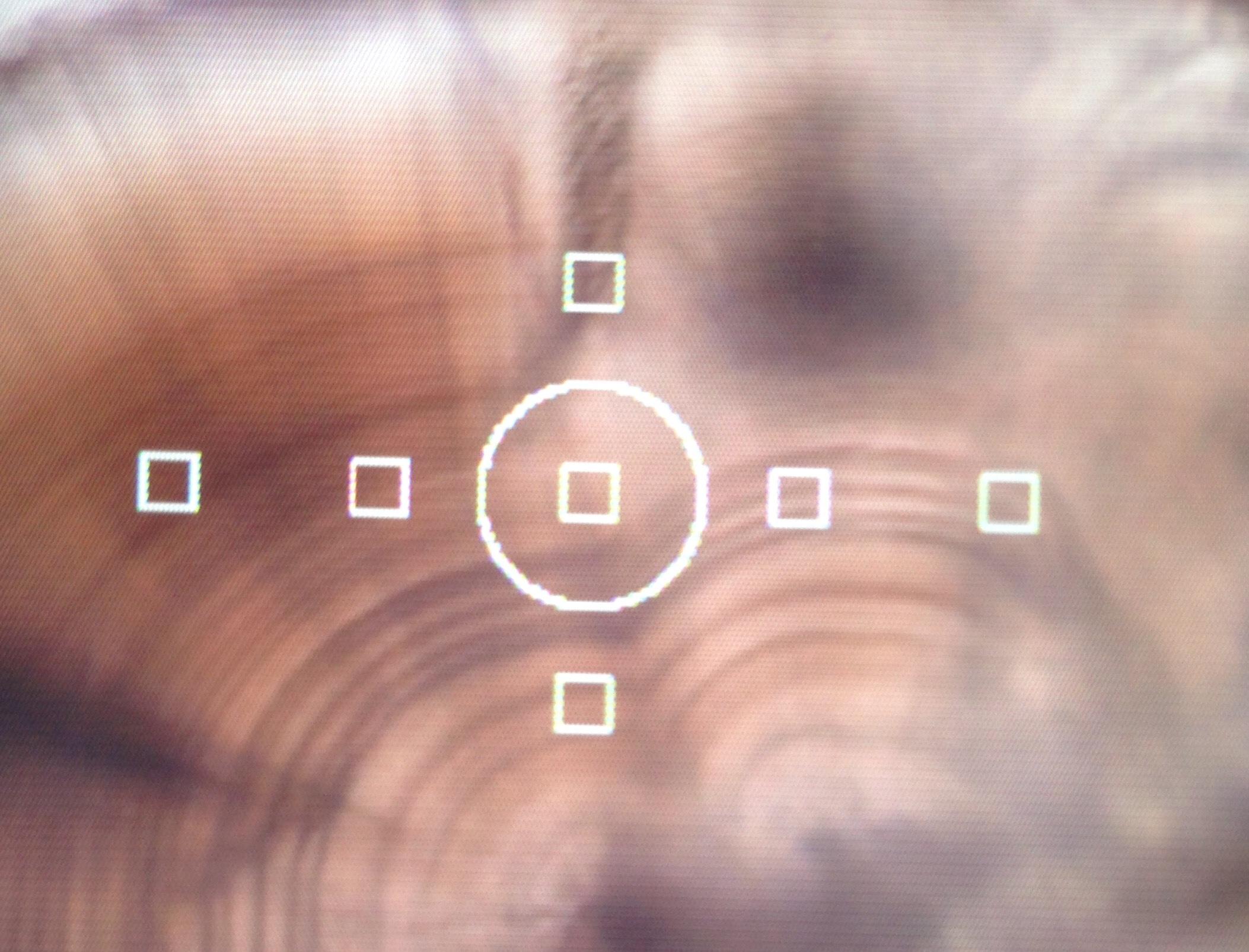 サケ発眼卵への耳石温度標識