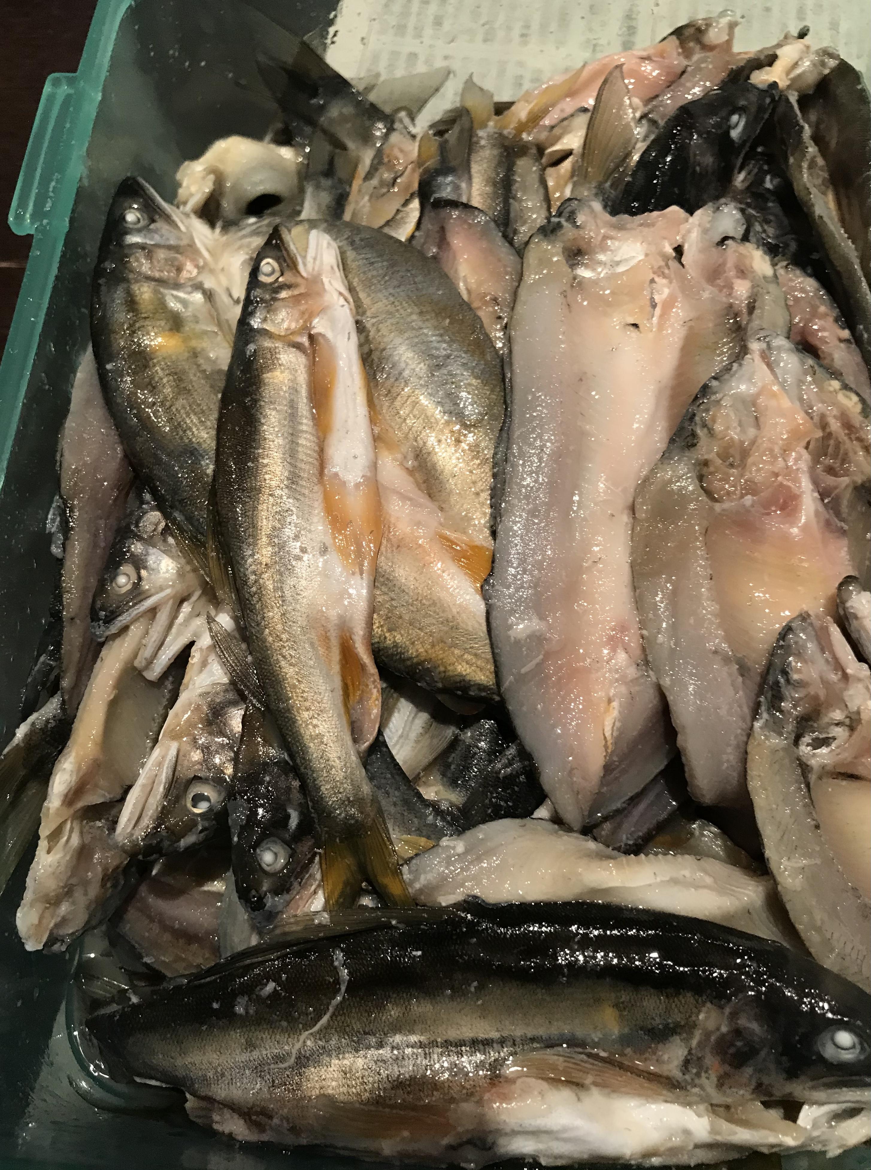 鮎調理情報、漁期終了のお知らせ