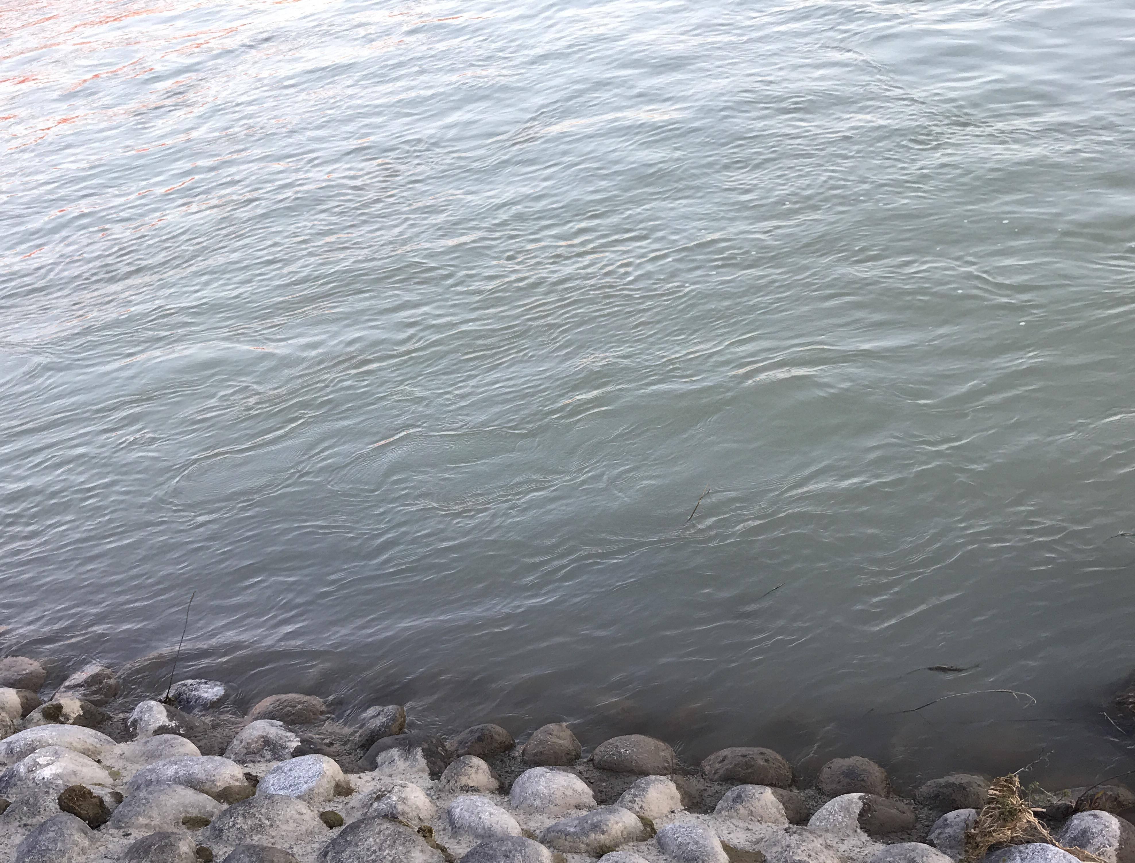 減水も濁りが強い状態