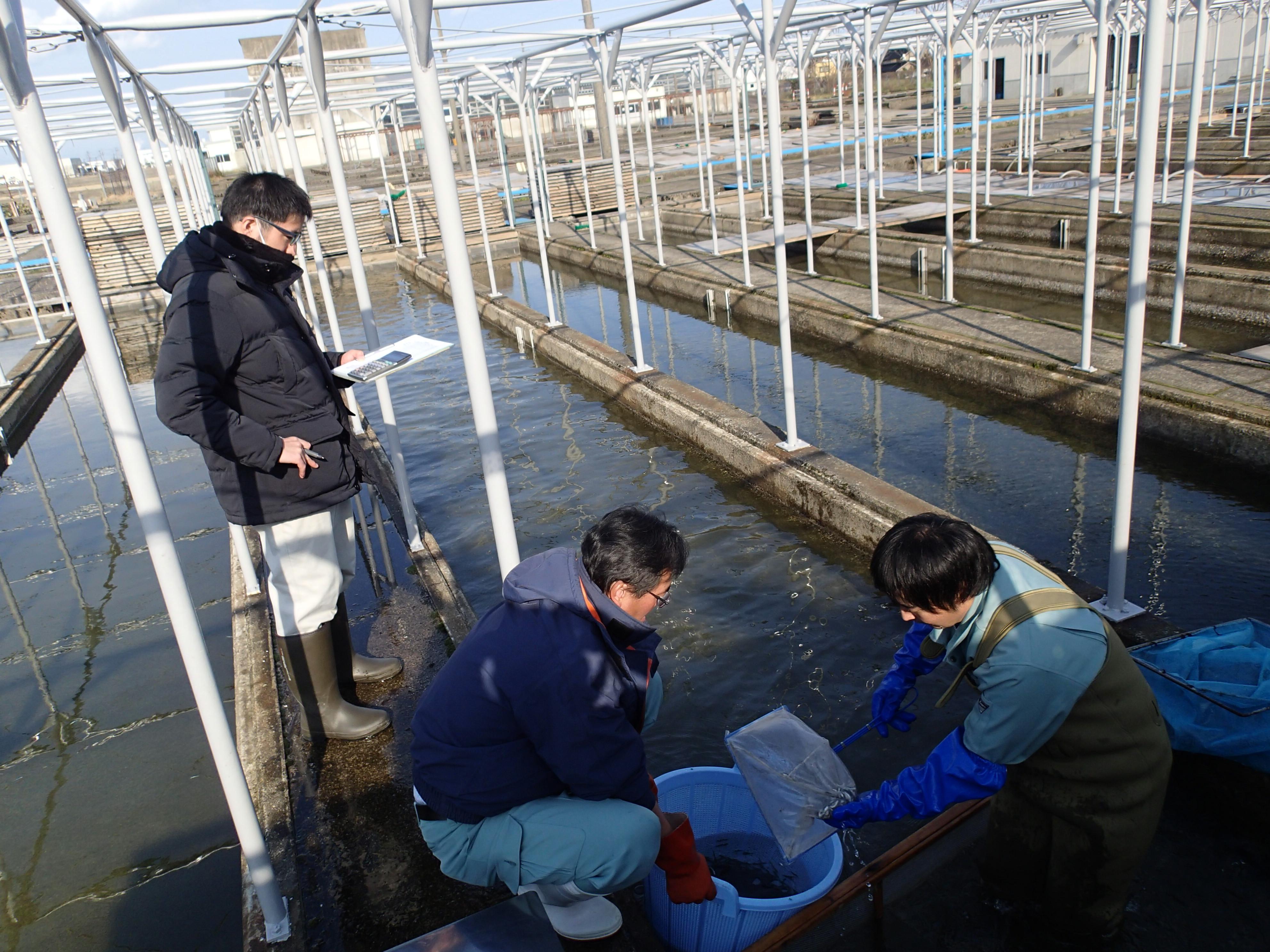 平成30年度サケ稚魚初放流