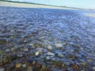 川の様子.水量25トン
