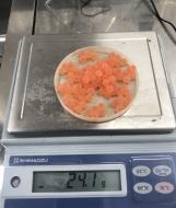 サケ採卵状況