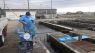 サクラマス1年魚スモルト放流�B