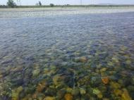 川の様子.水温上昇