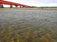 川の様子の
