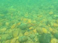 庄川 藻類調査�A