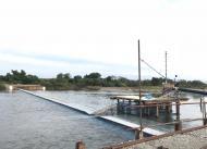 サケ捕獲のためのヤナ設置