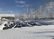大雪 積雪50cm以上