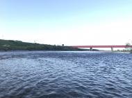河川水温とサクラマス釣り
